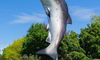 RAKAIA NEW ZEALAND welcome salmon iconic township entrance