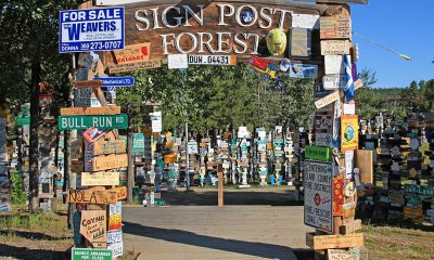 Sign forest post